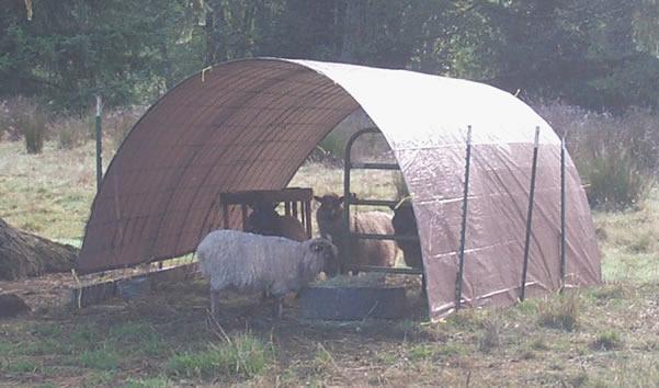 Hog panel shelter