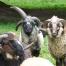 Thumbnail image for Mountain Niche Farm Summer Activities